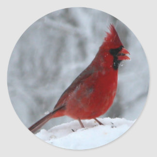 Pájaro rojo en la nieve etiqueta redonda
