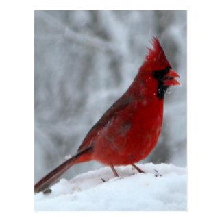 Pájaro rojo en la nieve postal