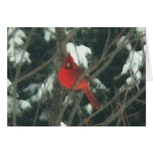 Pájaro rojo en la nieve tarjetas