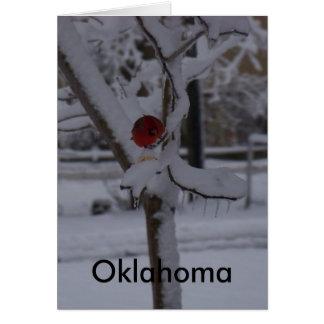 Pájaro rojo (Oklahoma) Tarjetón