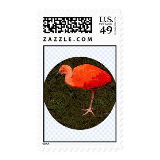 Pájaro rojo envio