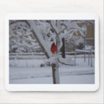 Pájaro rojo (tormenta del invierno) mousepad