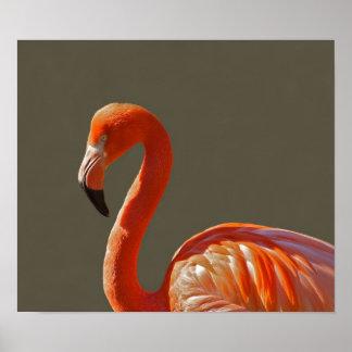 Pájaro rosado hermoso del flamenco posters