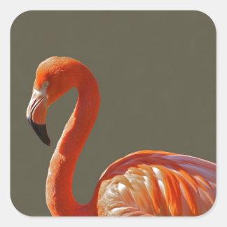 Pájaro rosado hermoso del flamenco pegatinas cuadradas personalizadas