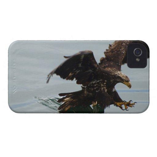 Pájaro salvaje calvo juvenil de Eagle iPhone 4 Fundas