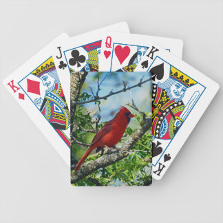 Pájaro salvaje cardinal rojo baraja de cartas bicycle
