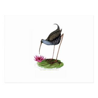 pájaro salvaje del carril del agua postal