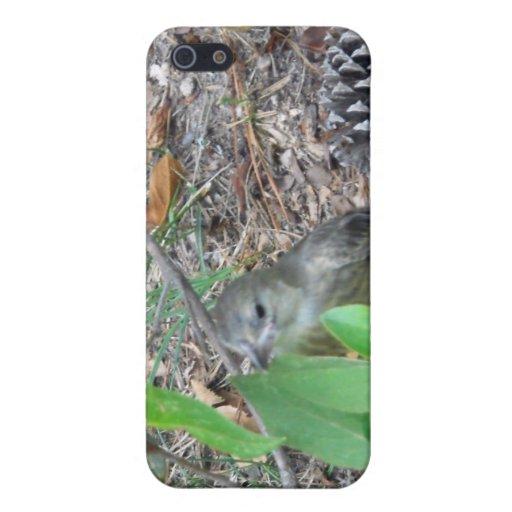 Pájaro salvaje en cepillo iPhone 5 protector