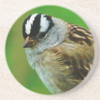 Pájaro salvaje - gorrión de canción coronado blanc posavasos personalizados