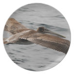 Pájaro salvaje que busca el almuerzo plato de cena
