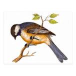 Pájaro siberiano dulce postal