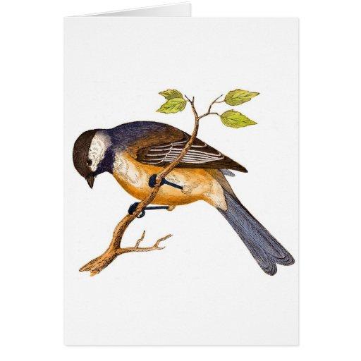 Pájaro siberiano dulce tarjetas