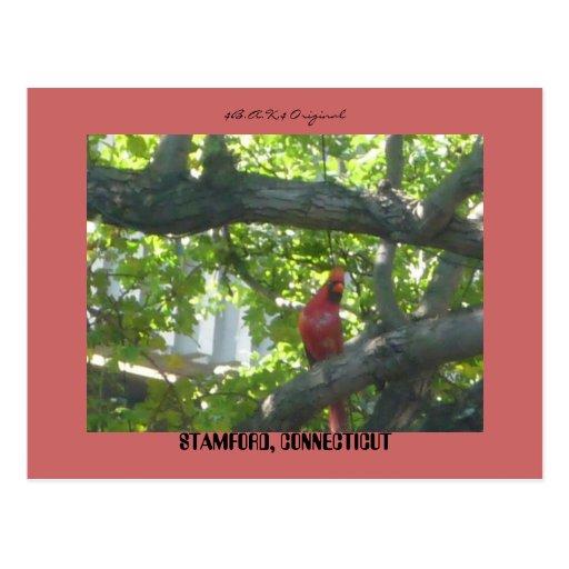 Pájaro Stamford CT… Postales