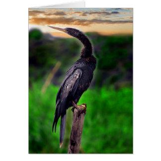 Pájaro Felicitación
