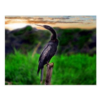 Pájaro Postales