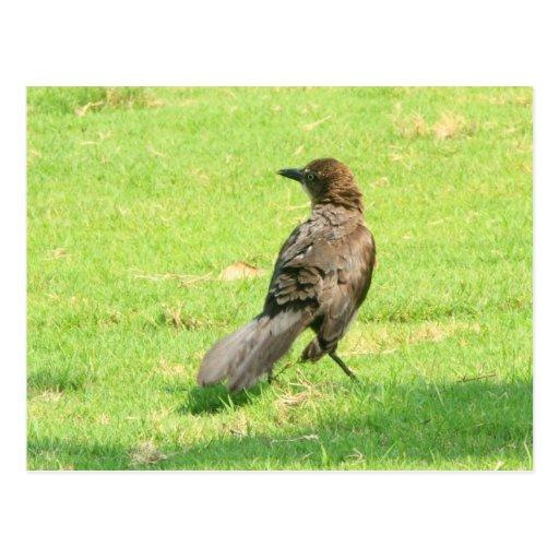 Pájaro Tarjetas Postales
