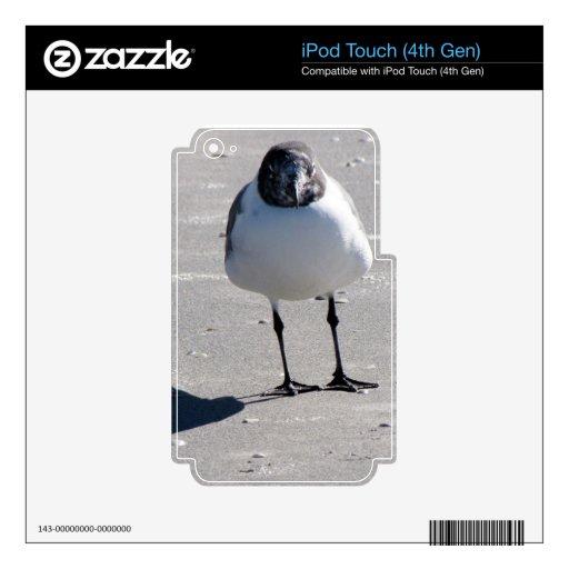 Pájaro tonto de la playa calcomanías para iPod touch 4G