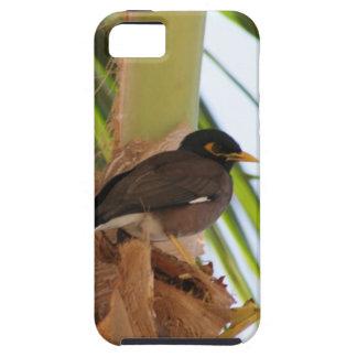 Pájaro tropical caso del iPhone de Maui, Hawaii iPhone 5 Case-Mate Carcasas
