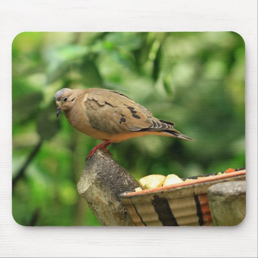 Pájaro tropical Mousepad Alfombrillas De Ratón