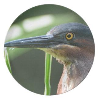 Pájaro verde de la garza platos