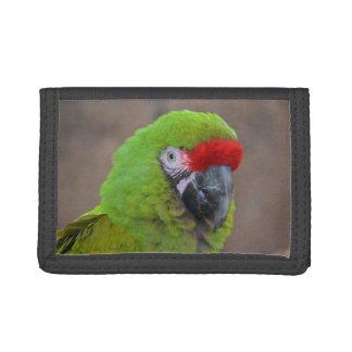 pájaro verde de la opinión de la cabeza del loro