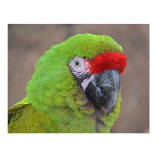 pájaro verde de la opinión de la cabeza del loro flyer a todo color