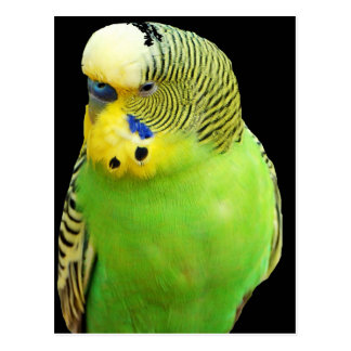 """Pájaro verde "" Postal"