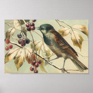 Pájaro y bayas del vintage póster