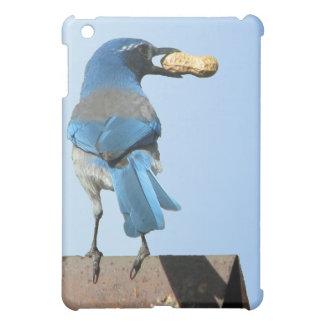 Pájaro y cacahuete lindos del arrendajo azul