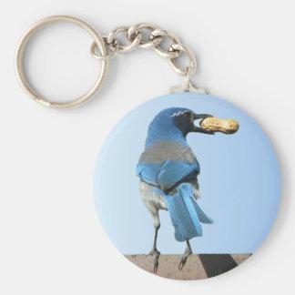 Pájaro y cacahuete lindos del arrendajo azul llavero redondo tipo pin