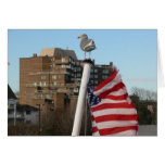 Pájaro y viaje de la bandera de los E.E.U.U. Tarjeta De Felicitación