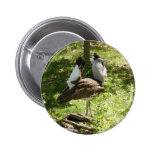 Pájaros africanos: Bustard de Kori Pin