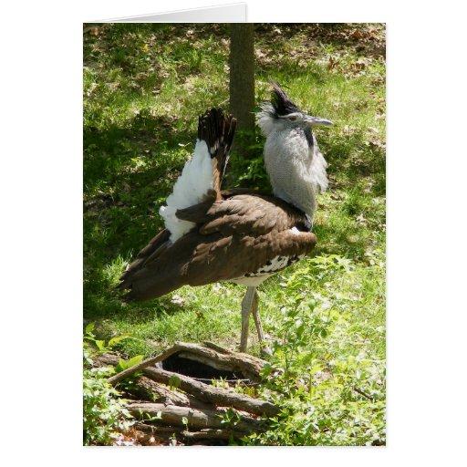 Pájaros africanos: Bustard de Kori Tarjeton