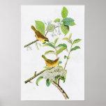 Pájaros Amarillos-breasted América de Juan Audubon Póster