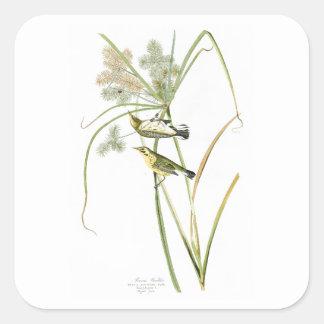 Pájaros América de John James Audubon de la Pegatina Cuadrada