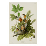 Pájaros americanos de John James Audubon del Póster
