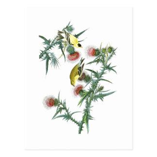 Pájaros americanos de Juan Audubon del Goldfinch Tarjeta Postal