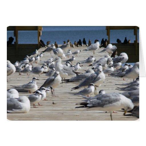 Pájaros atracados en la costa de Carolina del Tarjeta Pequeña