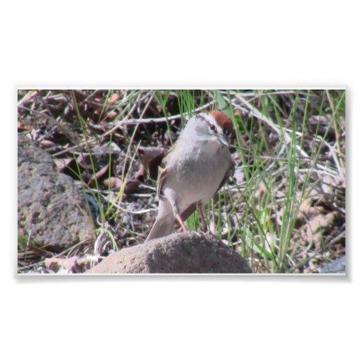 Pájaros Aves de los animales de la fauna de Ishawo Fotografias