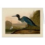 Pájaros azules de la garza de la grúa de Audubon d Tarjeta