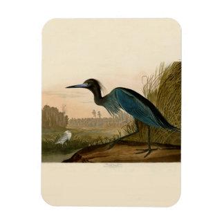 Pájaros azules de la garza de la grúa de Audubon Imán Rectangular