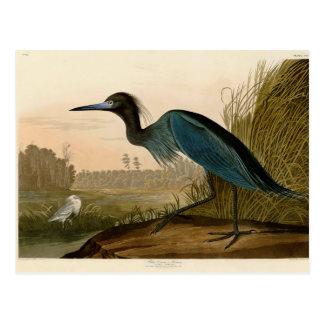 Pájaros azules de la garza de la grúa de Audubon Postal