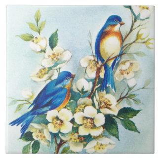 Pájaros azules y flores de la flor blanca en la azulejo cuadrado grande
