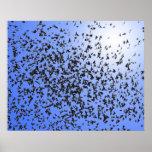 Pájaros - Birds of a Feather Poster