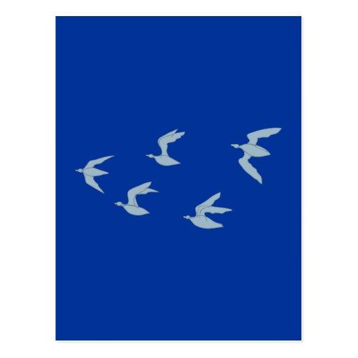 Pájaros birds tarjetas postales