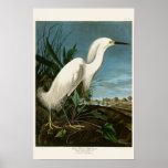 Pájaros blancos de Audubon del Egret de la garza Póster