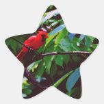 Pájaros bonitos pegatina en forma de estrella