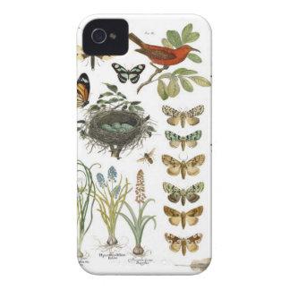 pájaros botánicos franceses y flores del vintage carcasa para iPhone 4