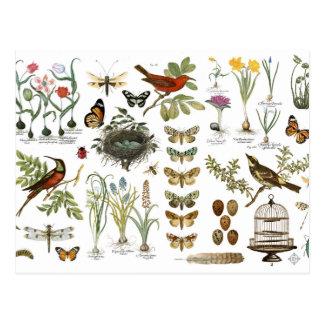 pájaros botánicos franceses y flores del vintage postal