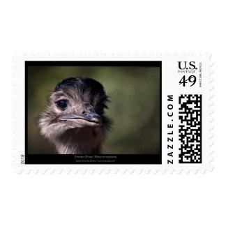 Pájaros brasileños 009 - Rhea mayor Rhea americana Franqueo